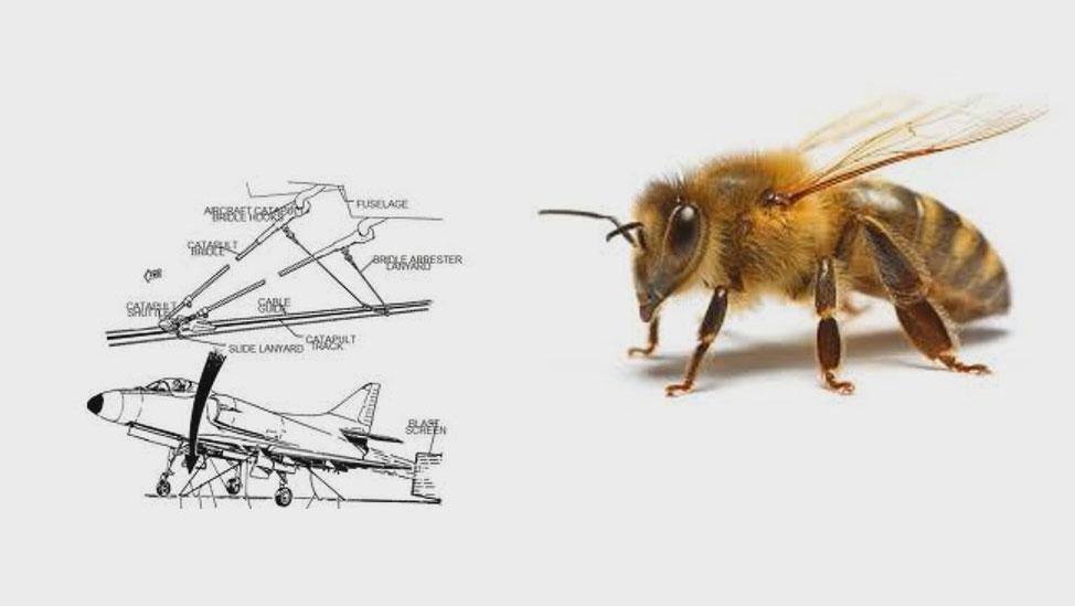Jaký je rozdíl mezi letadlem a včelkou?